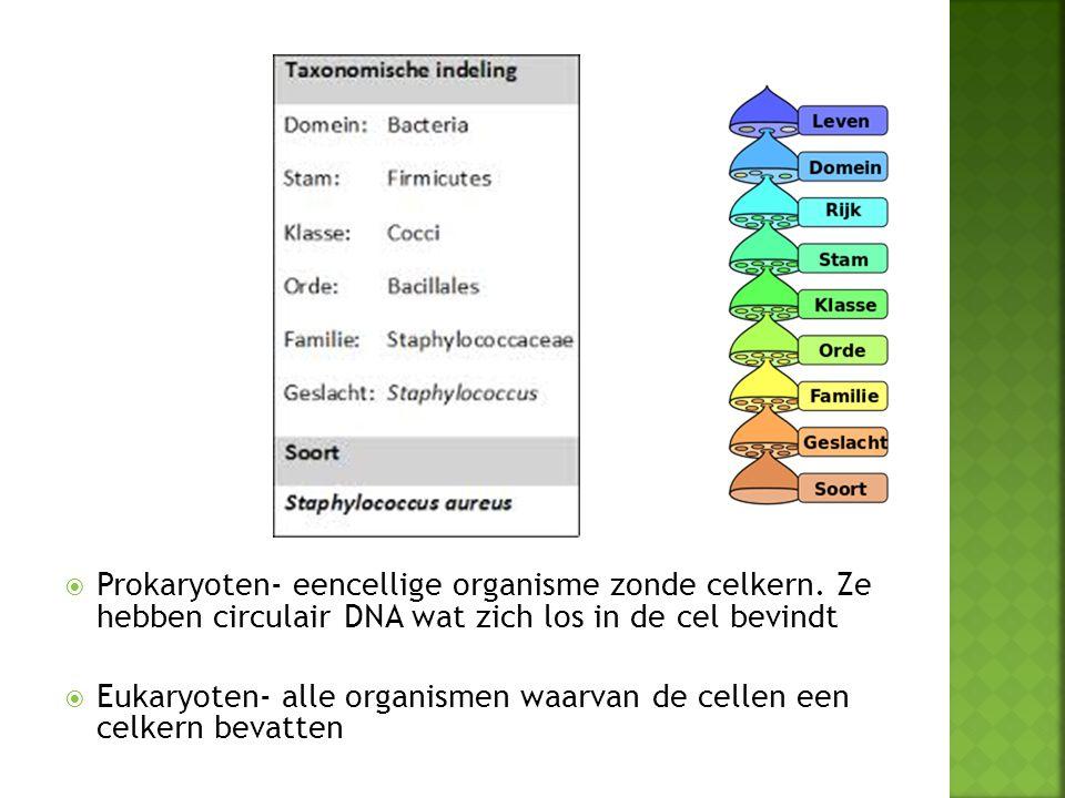 Prokaryoten- eencellige organisme zonde celkern
