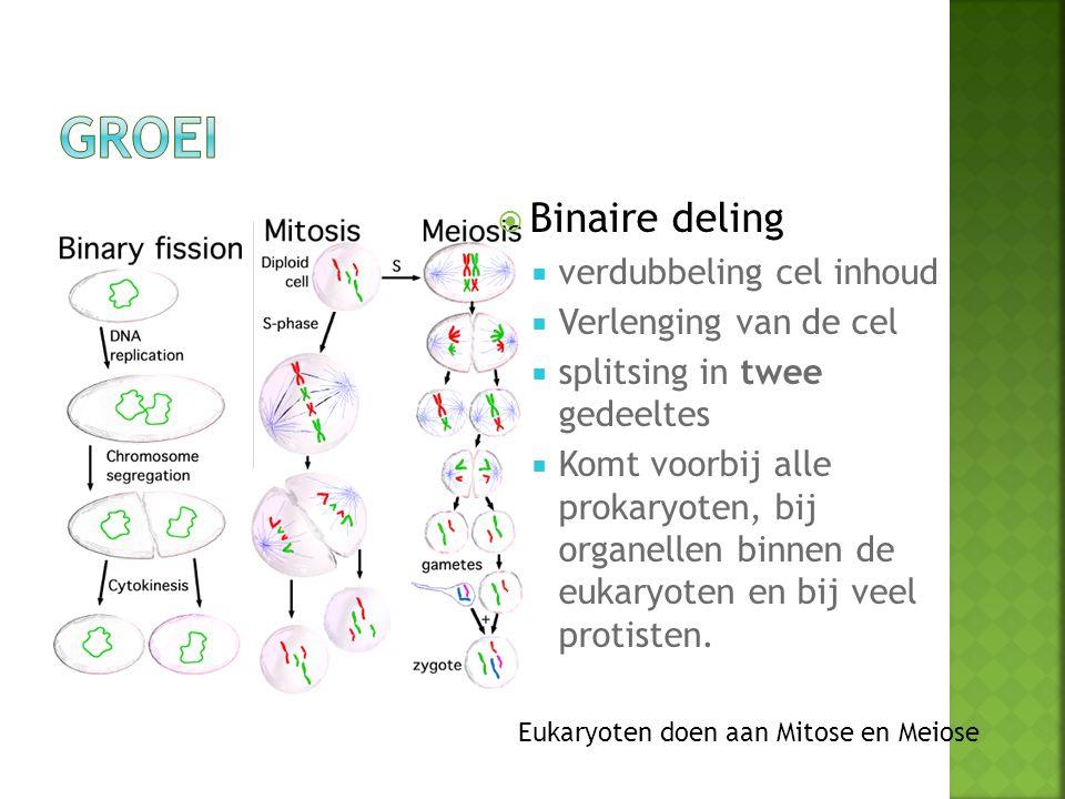 Groei Binaire deling verdubbeling cel inhoud Verlenging van de cel