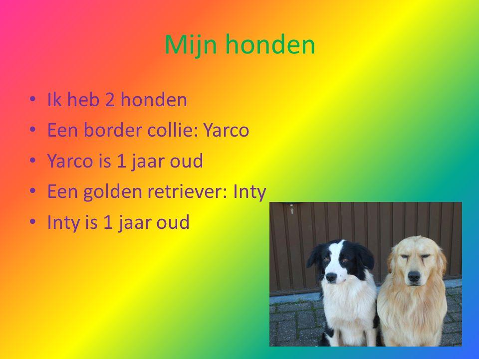 Mijn honden Ik heb 2 honden Een border collie: Yarco