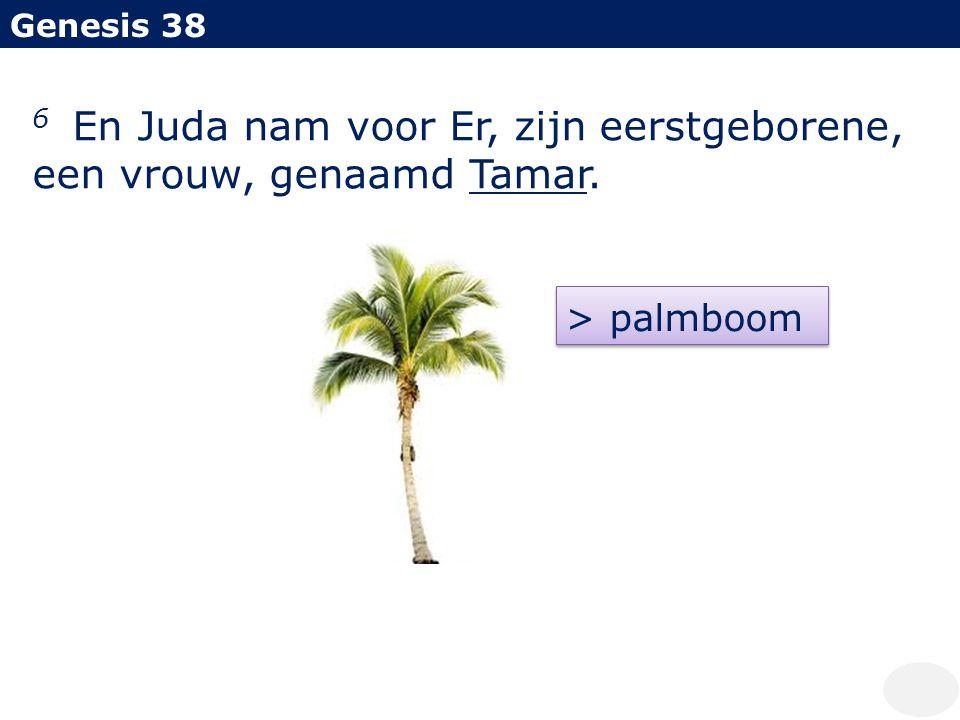 6 En Juda nam voor Er, zijn eerstgeborene, een vrouw, genaamd Tamar.