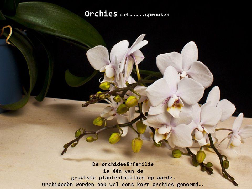Orchies met.....spreuken De orchideeënfamilie is één van de