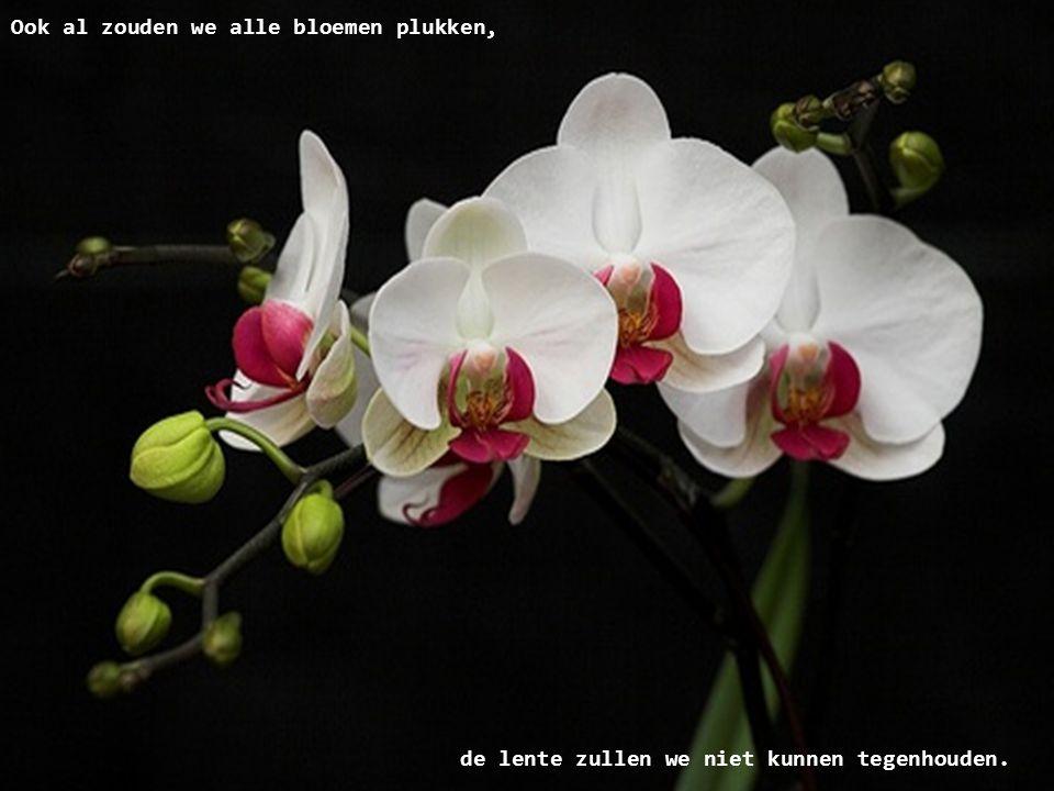 Ook al zouden we alle bloemen plukken,