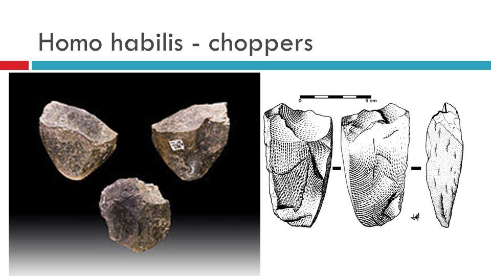 Homo habilis - choppers