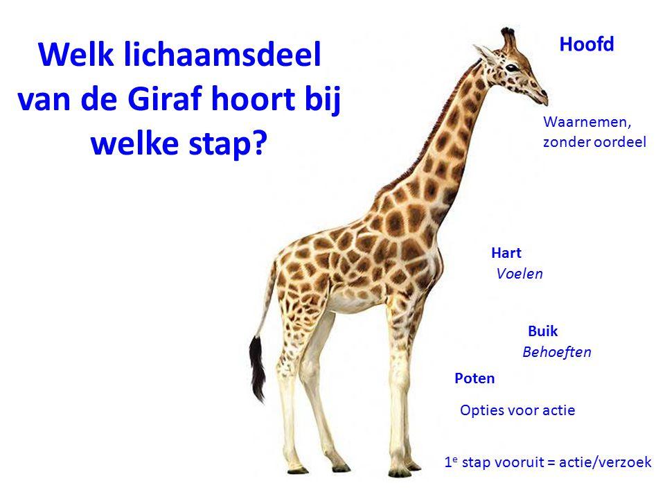Welk lichaamsdeel van de Giraf hoort bij welke stap