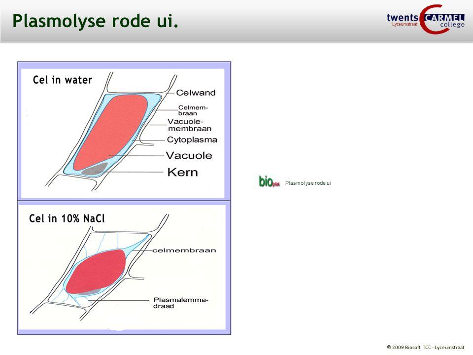 Plasmolyse rode ui. Plasmolyse rode ui