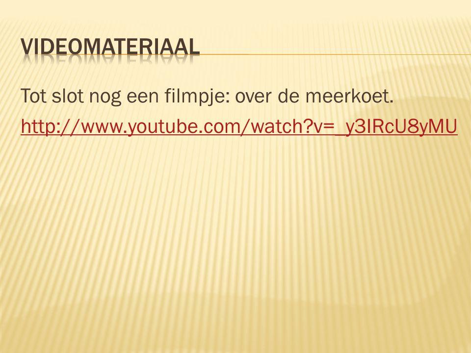 Videomateriaal Tot slot nog een filmpje: over de meerkoet.