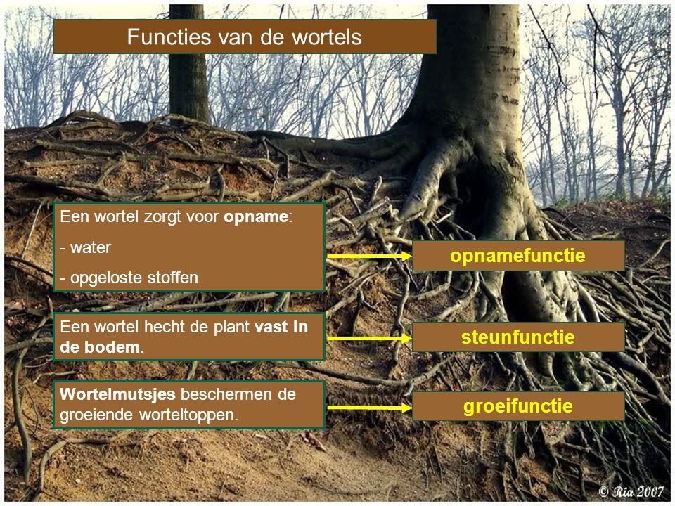 Functies van de wortels