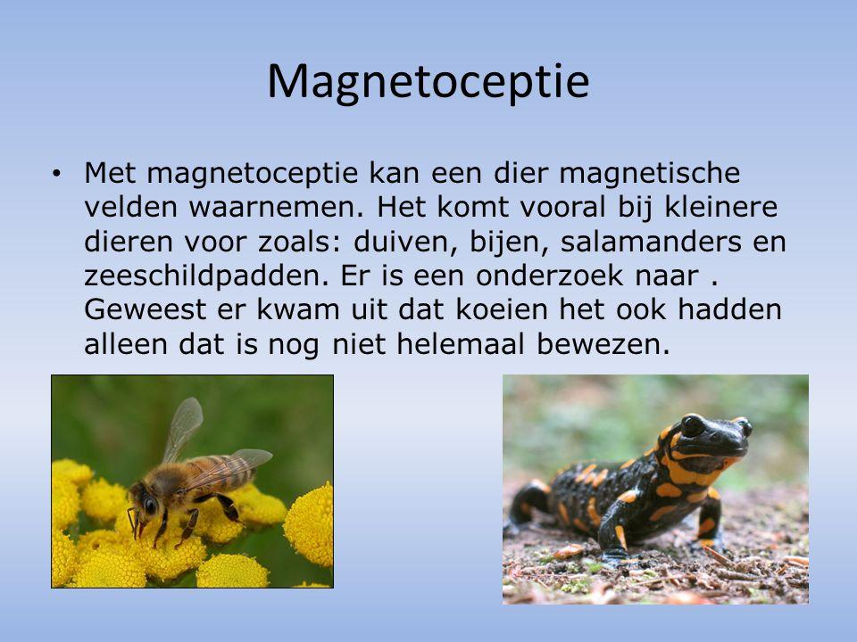 Magnetoceptie