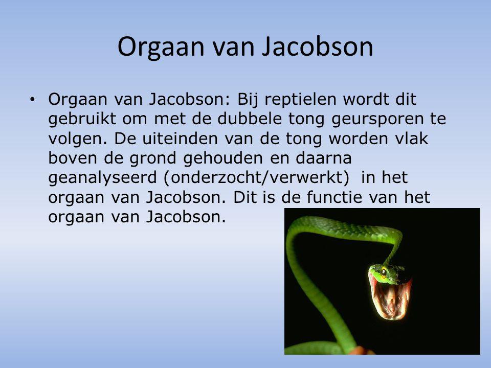 Orgaan van Jacobson