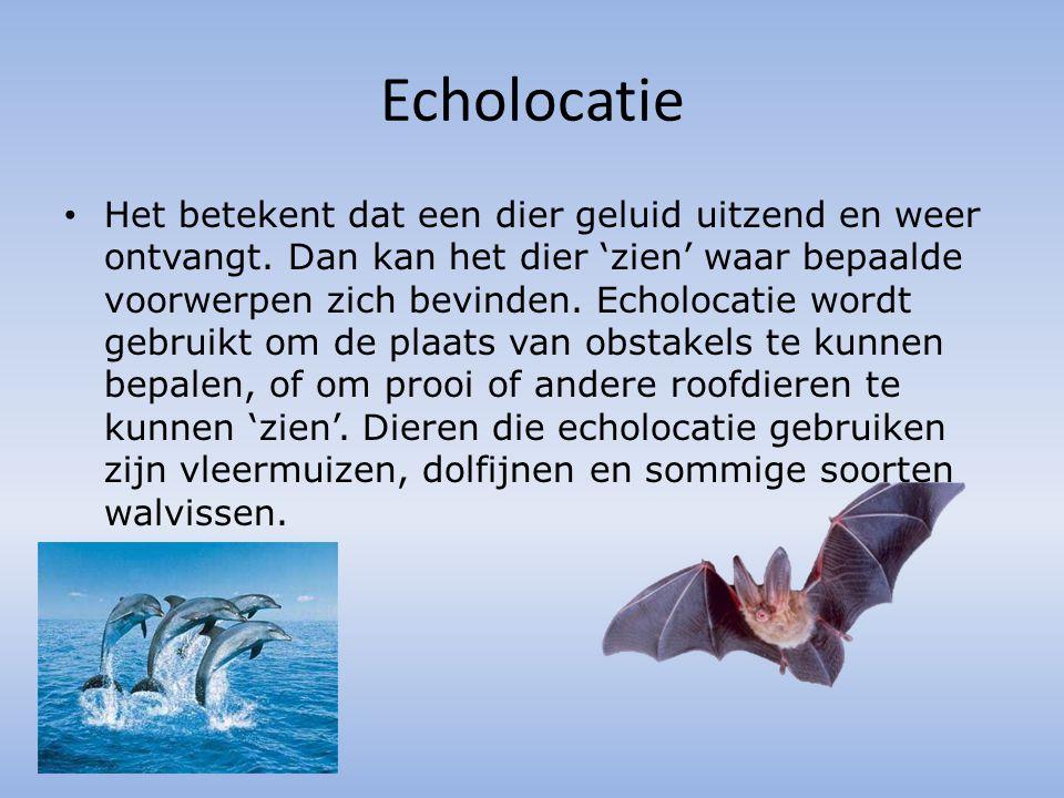 Echolocatie