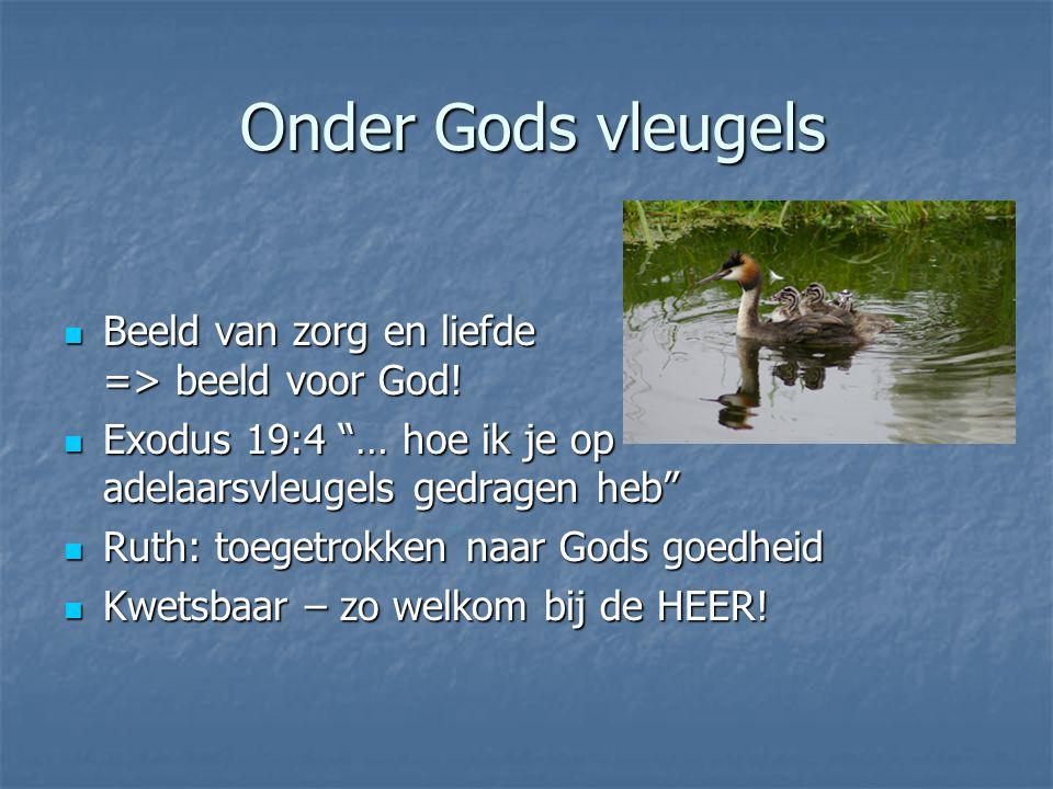 Onder Gods vleugels Beeld van zorg en liefde => beeld voor God!