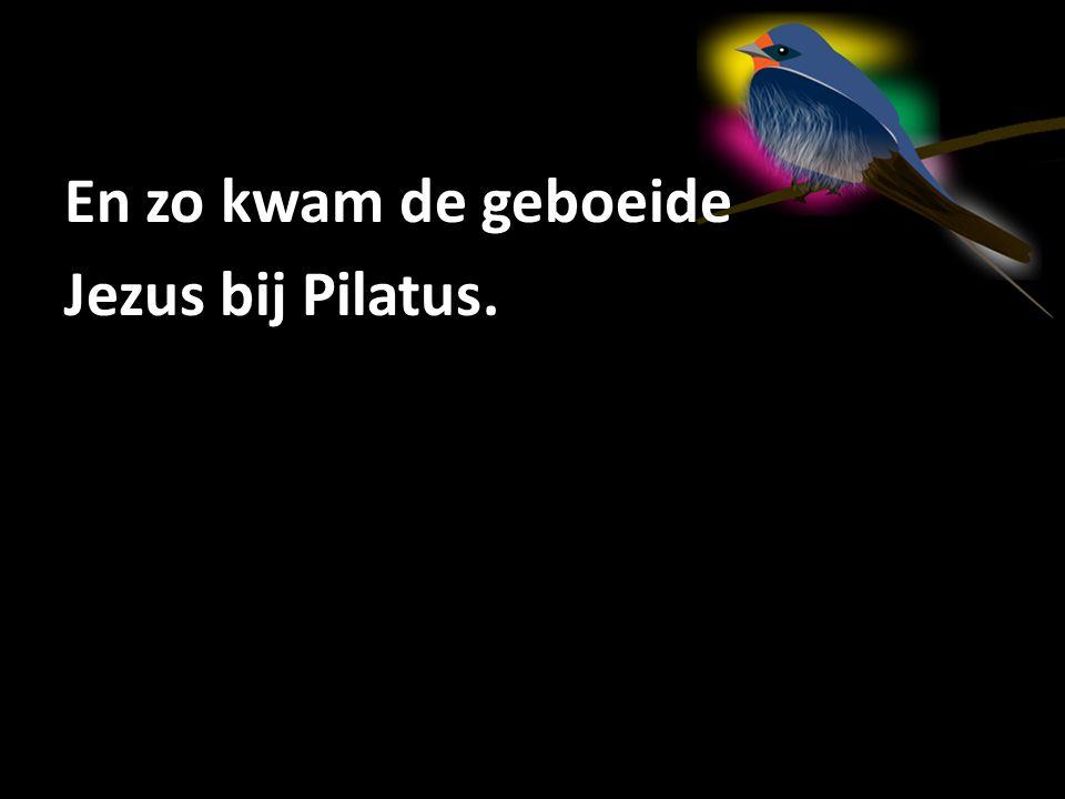 En zo kwam de geboeide Jezus bij Pilatus.