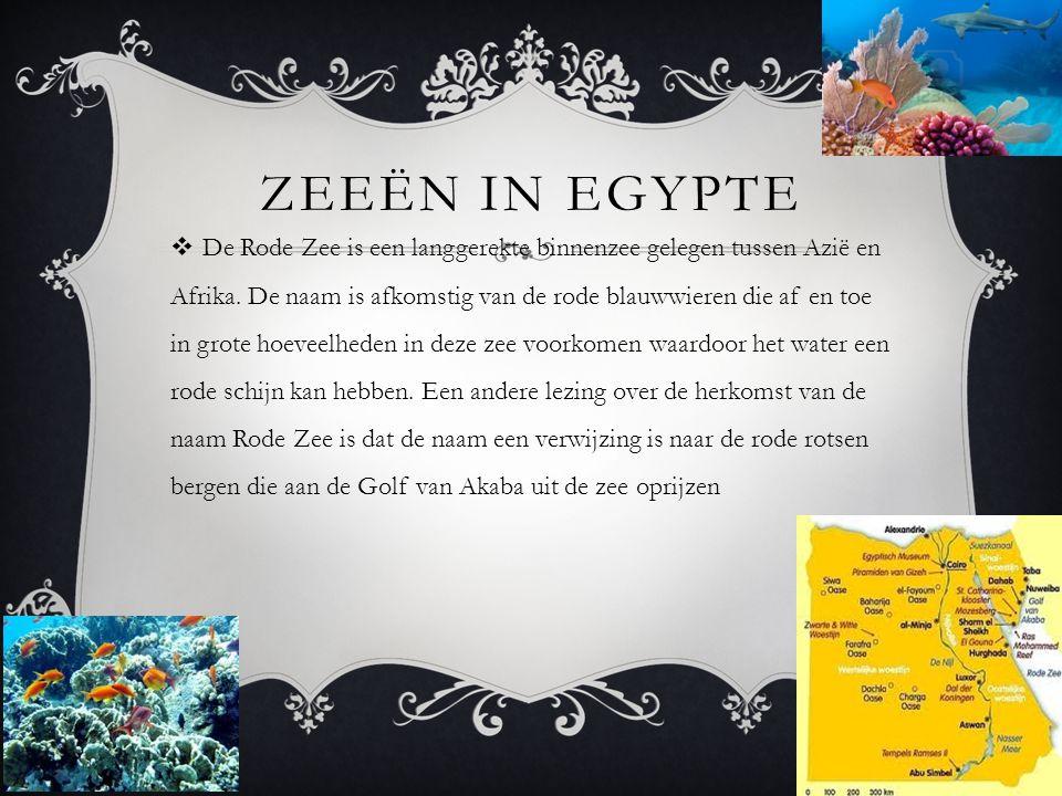 Zeeën in egypte