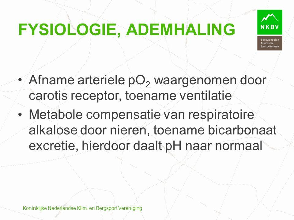 Fysiologie, ademhaling