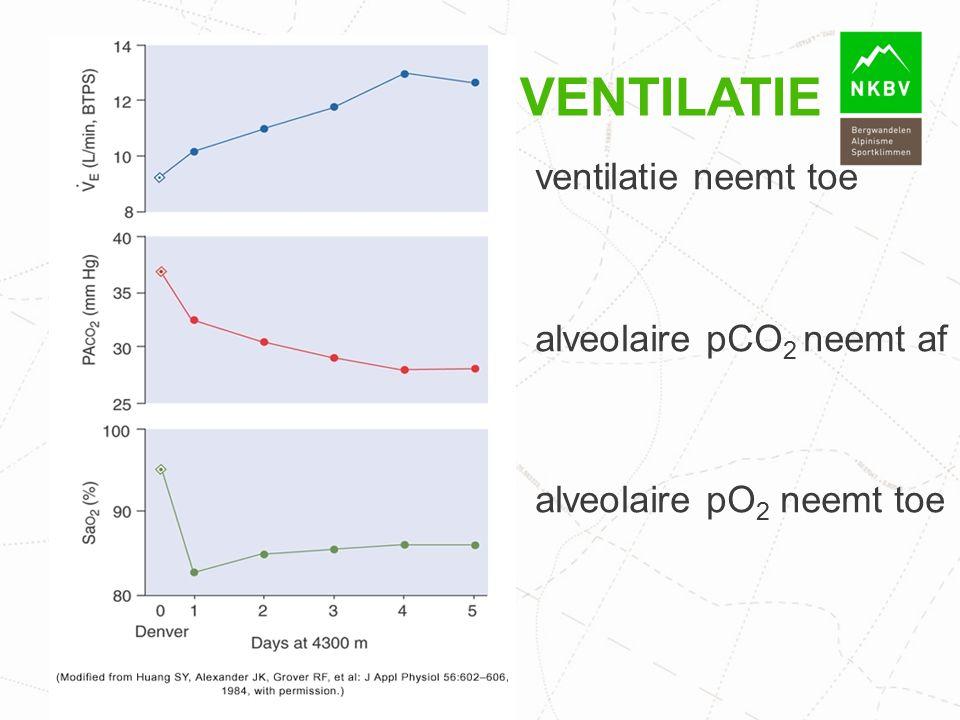 Ventilatie ventilatie neemt toe alveolaire pCO2 neemt af alveolaire pO2 neemt toe