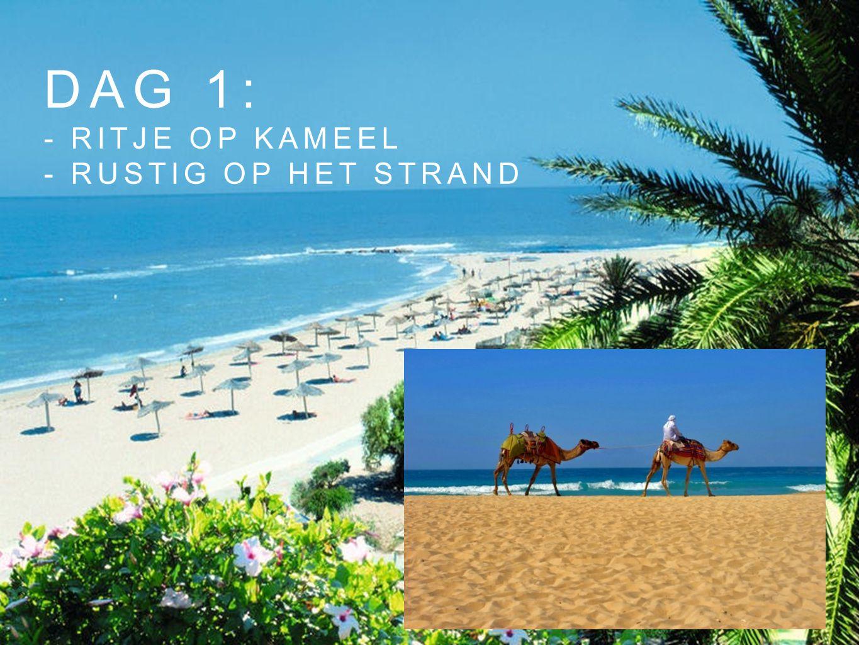 DAg 1: - ritje op kameel - Rustig op het strand
