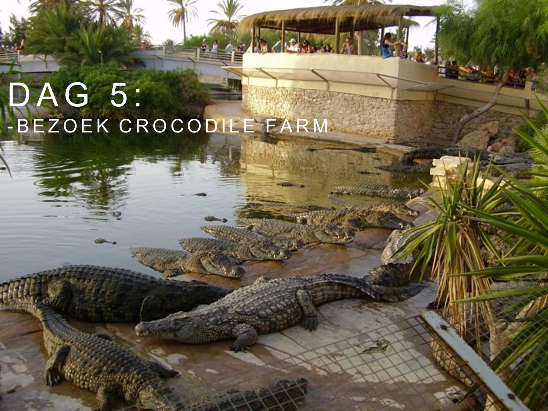 Dag 5: -bezoek crocodile farm