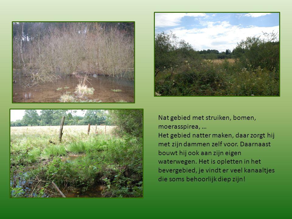 Nat gebied met struiken, bomen, moerasspirea, …