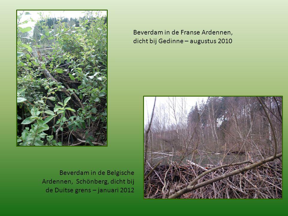 Beverdam in de Franse Ardennen, dicht bij Gedinne – augustus 2010