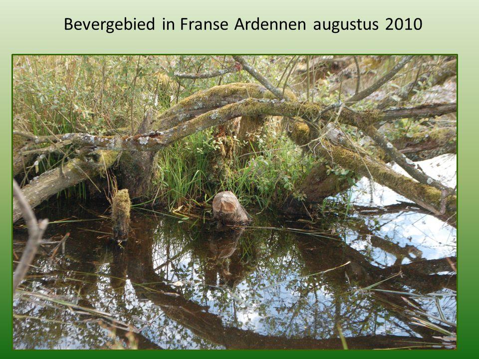 Bevergebied in Franse Ardennen augustus 2010
