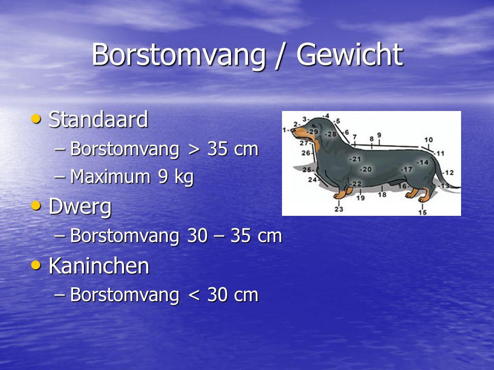 Borstomvang / Gewicht Standaard Dwerg Kaninchen Borstomvang > 35 cm