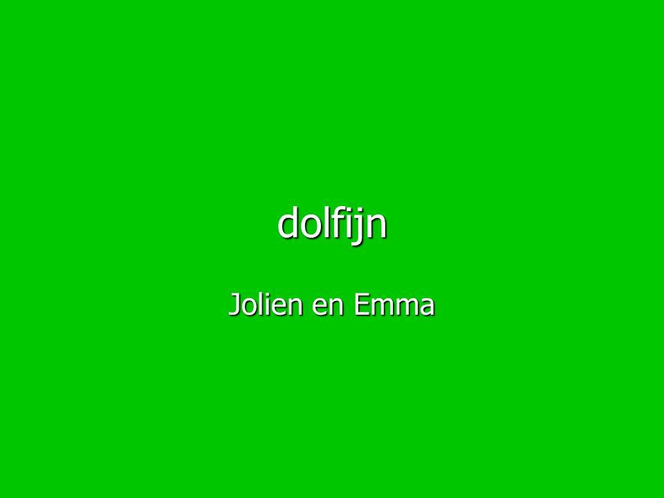 dolfijn Jolien en Emma