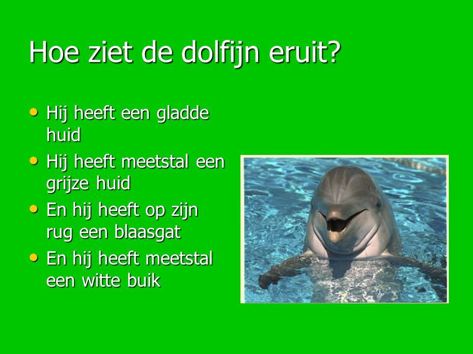 Hoe ziet de dolfijn eruit
