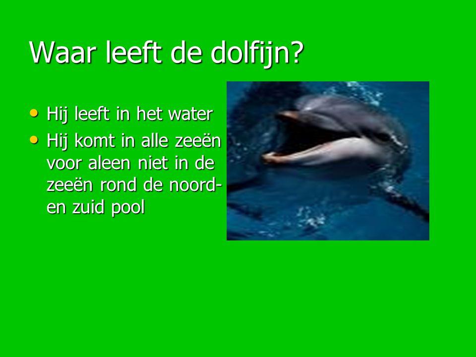 Waar leeft de dolfijn Hij leeft in het water