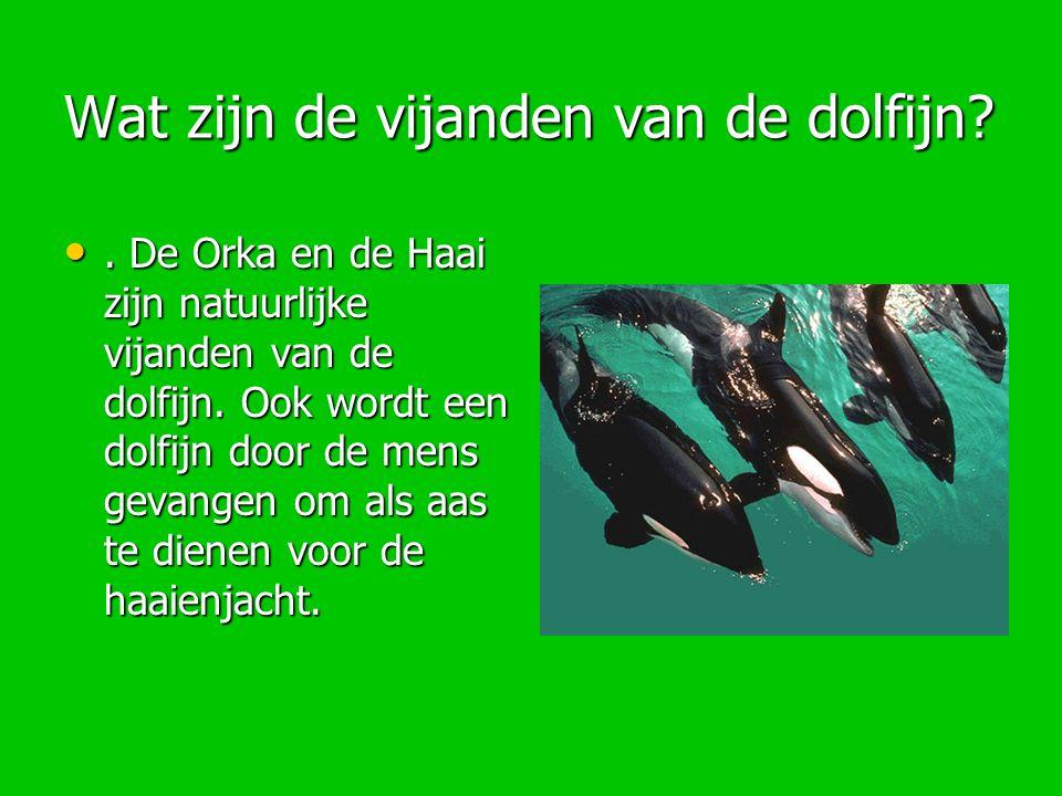 Wat zijn de vijanden van de dolfijn