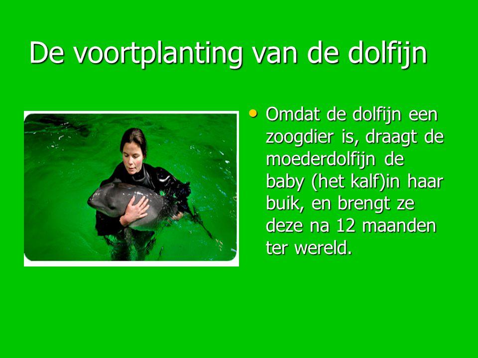 De voortplanting van de dolfijn