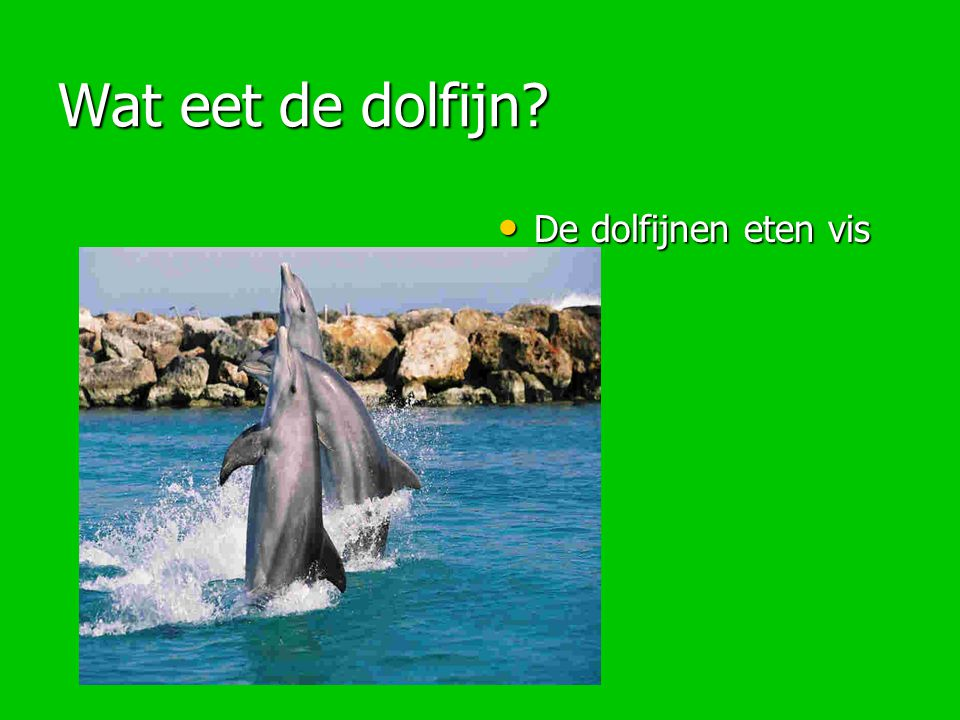 Wat eet de dolfijn De dolfijnen eten vis