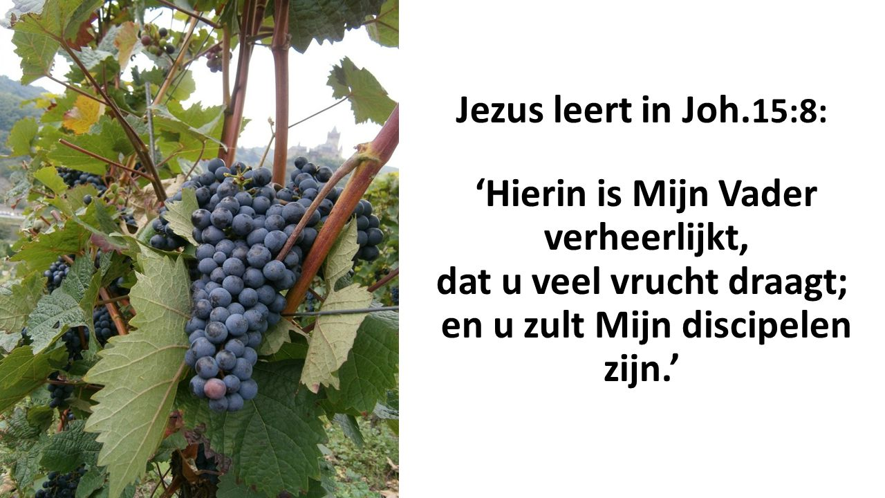 Jezus leert in Joh.15:8: 'Hierin is Mijn Vader verheerlijkt, dat u veel vrucht draagt; en u zult Mijn discipelen zijn.'