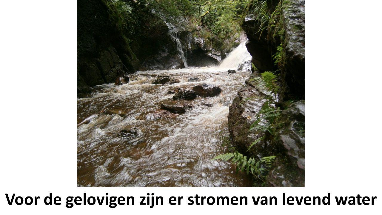 Voor de gelovigen zijn er stromen van levend water