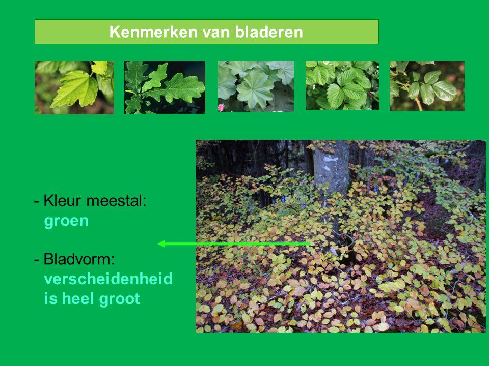 Kenmerken van bladeren