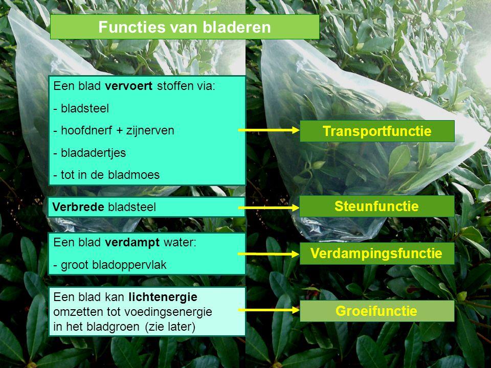Functies van bladeren Transportfunctie Steunfunctie Verdampingsfunctie