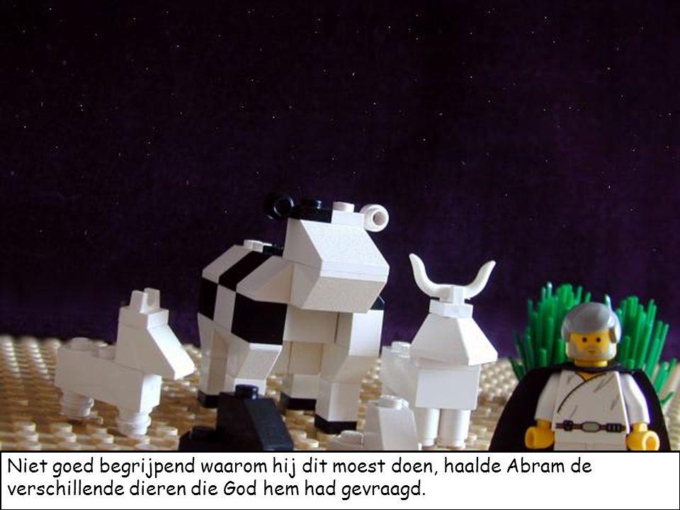 Niet goed begrijpend waarom hij dit moest doen, haalde Abram de verschillende dieren die God hem had gevraagd.