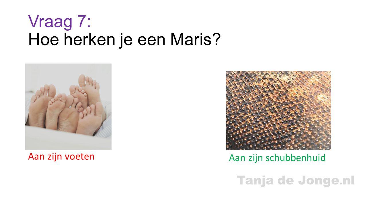 Vraag 7: Hoe herken je een Maris