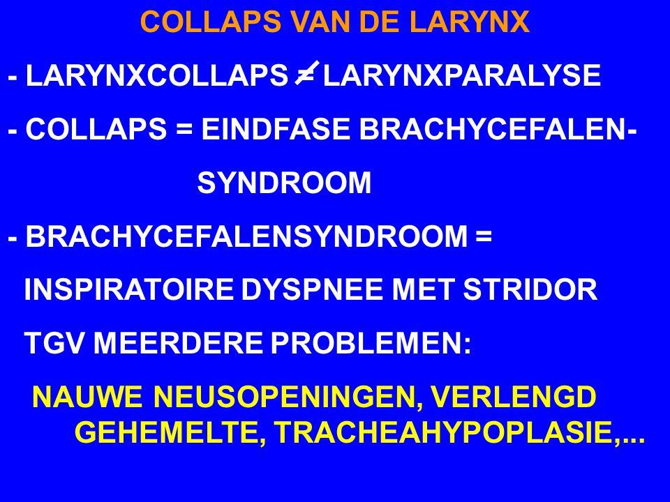 COLLAPS VAN DE LARYNX - LARYNXCOLLAPS = LARYNXPARALYSE. - COLLAPS = EINDFASE BRACHYCEFALEN- SYNDROOM.