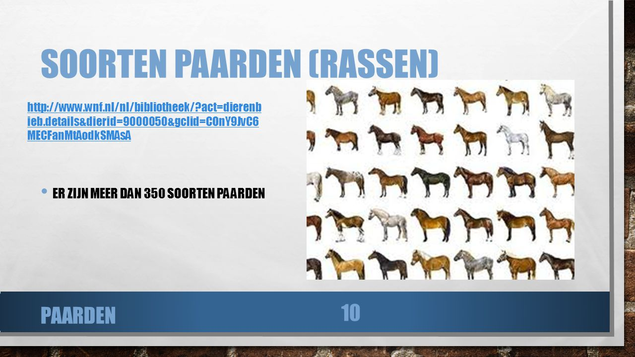 Soorten paarden (rassen)