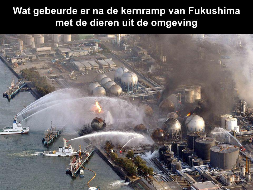 Wat gebeurde er na de kernramp van Fukushima