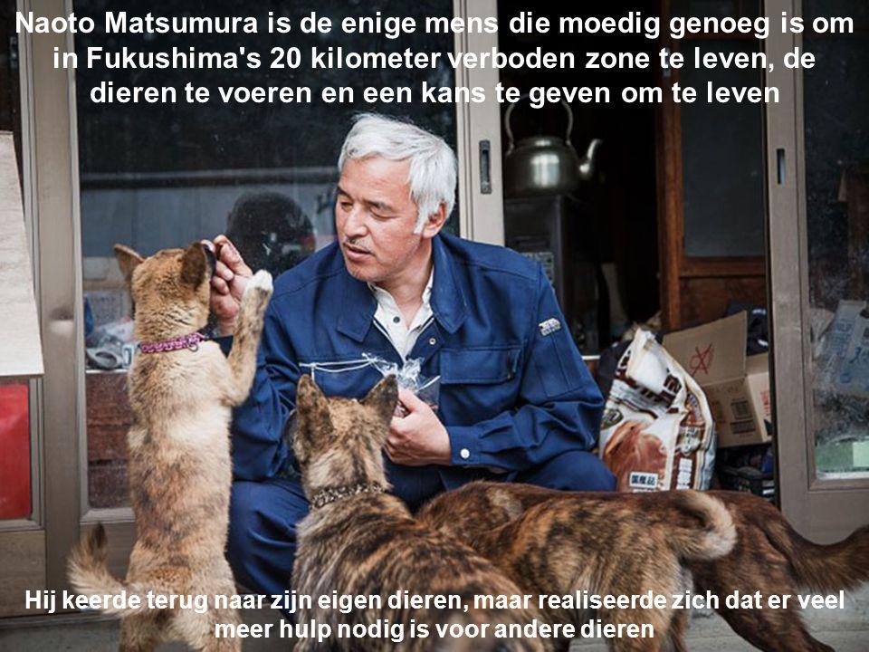 Naoto Matsumura is de enige mens die moedig genoeg is om in Fukushima s 20 kilometer verboden zone te leven, de dieren te voeren en een kans te geven om te leven