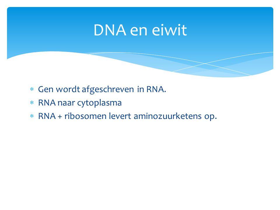 DNA en eiwit Gen wordt afgeschreven in RNA. RNA naar cytoplasma