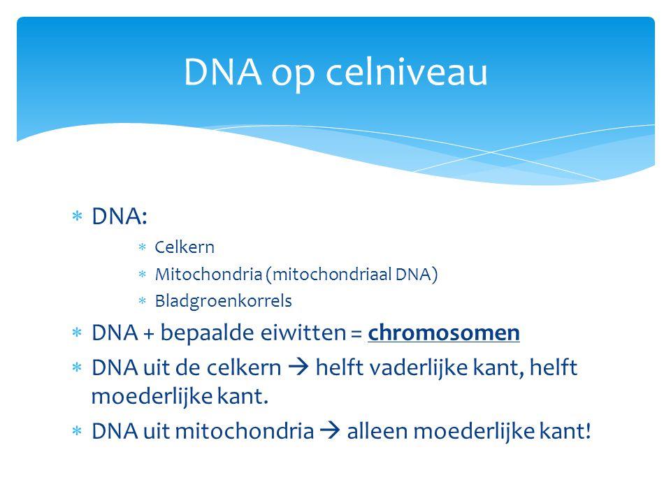 DNA op celniveau DNA: DNA + bepaalde eiwitten = chromosomen