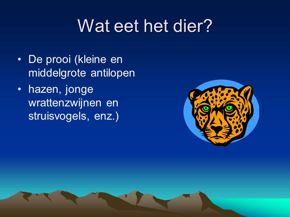 Wat eet het dier De prooi (kleine en middelgrote antilopen