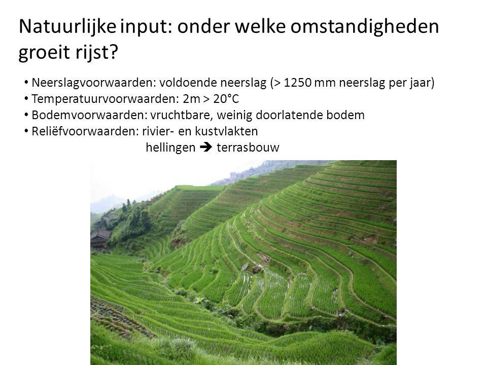 Natuurlijke input: onder welke omstandigheden groeit rijst