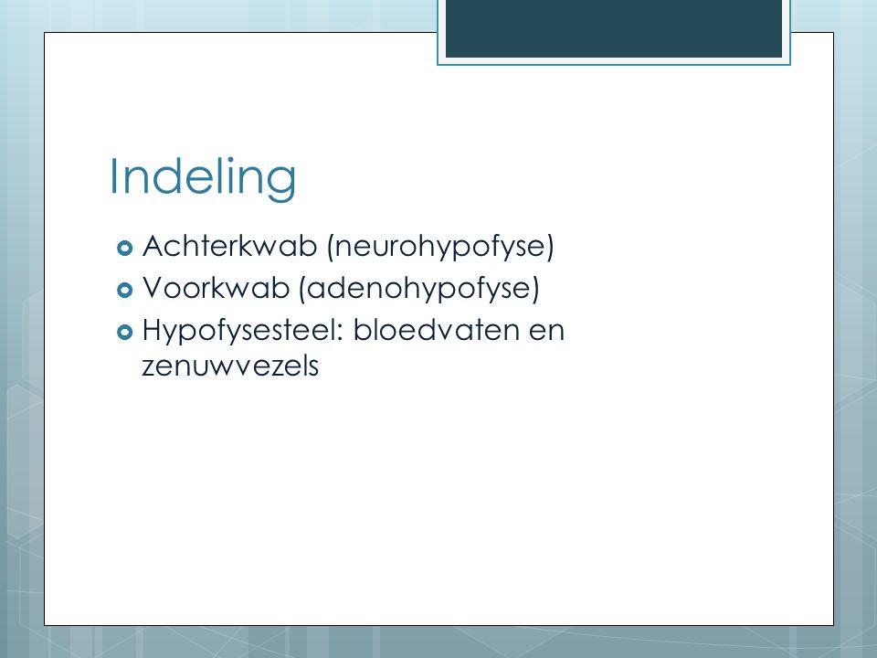 Indeling Achterkwab (neurohypofyse) Voorkwab (adenohypofyse)