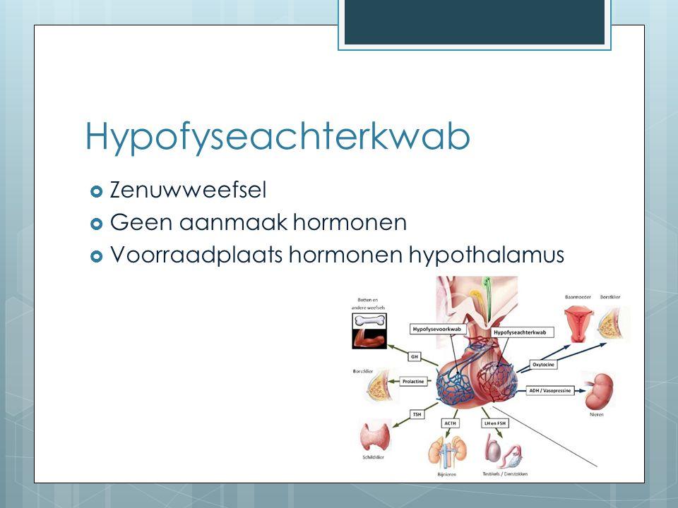 Hypofyseachterkwab Zenuwweefsel Geen aanmaak hormonen