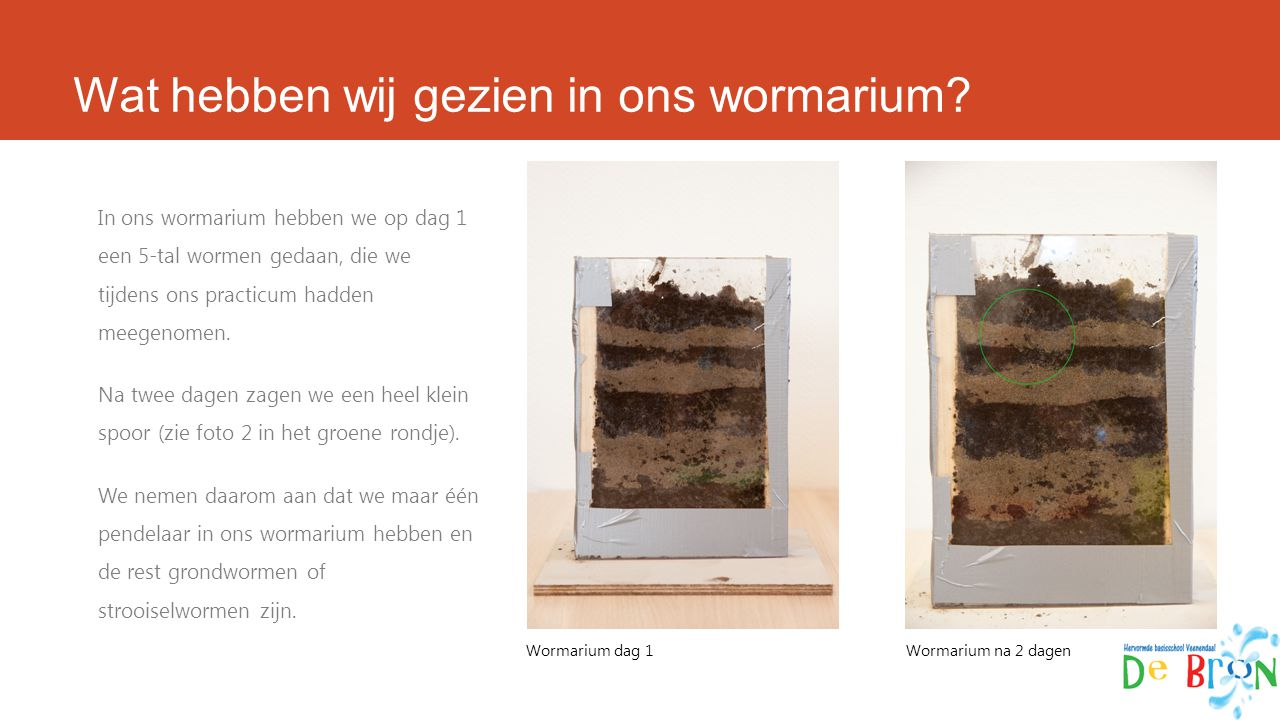 Wat hebben wij gezien in ons wormarium