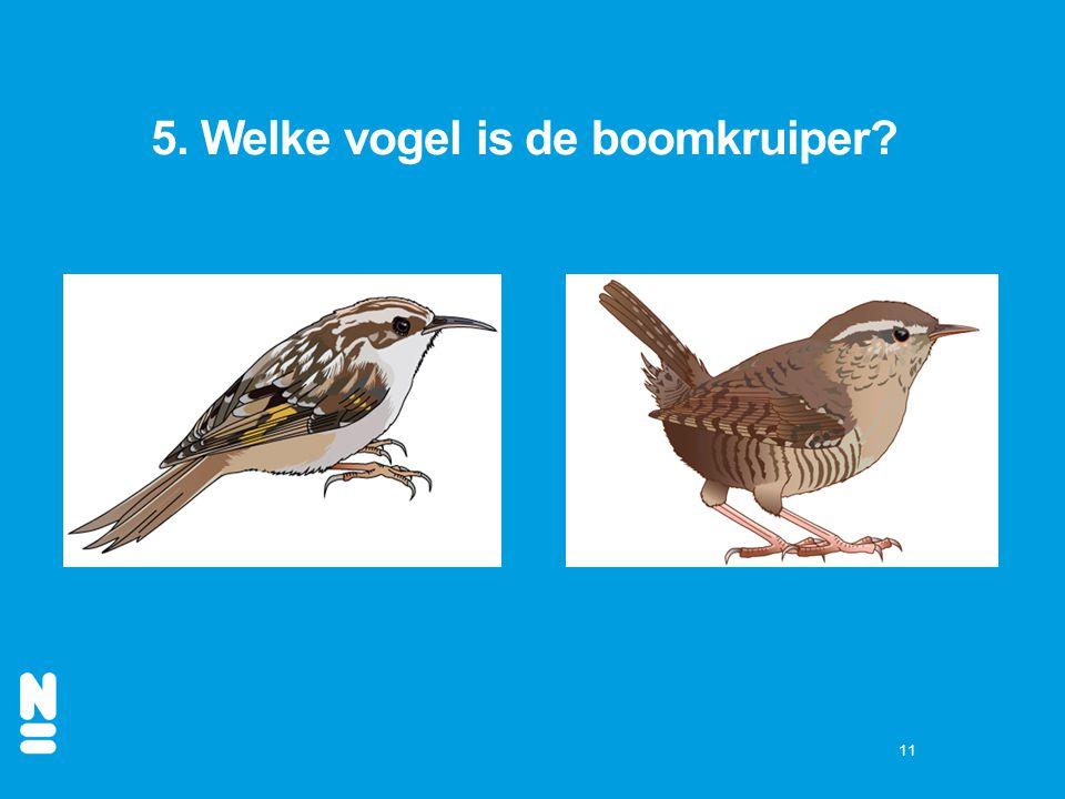 5. Welke vogel is de boomkruiper
