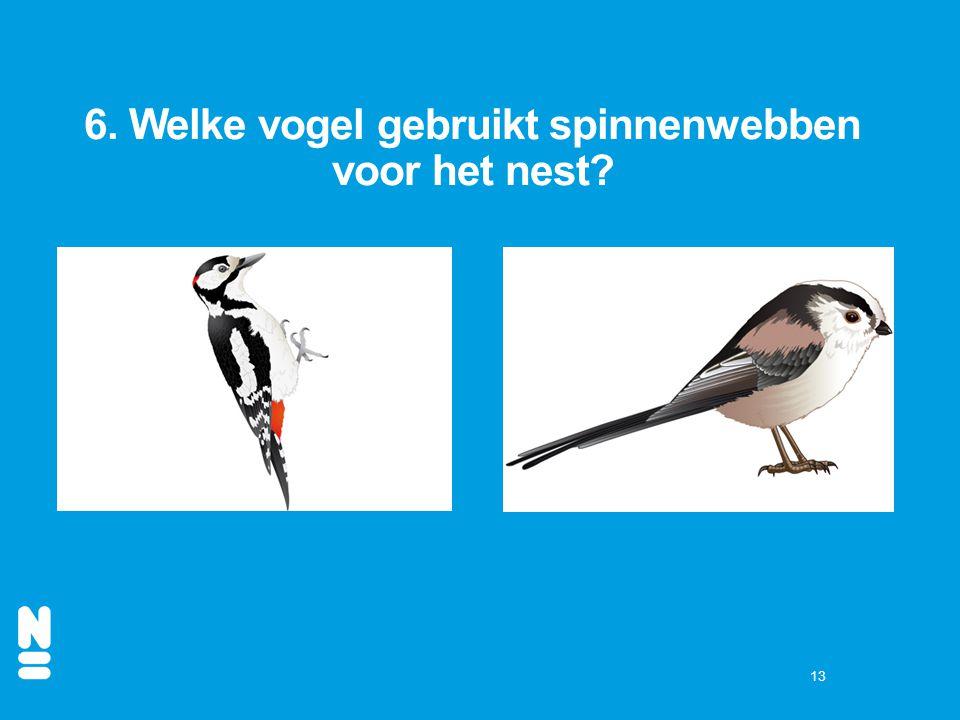 6. Welke vogel gebruikt spinnenwebben voor het nest